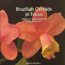 Brazilian Orchids in Focus
